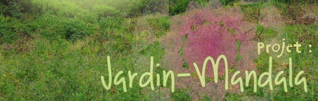 En direct du jardin mandala arec for Jardin mandala