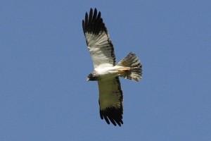 Les oiseaux de La Réunion