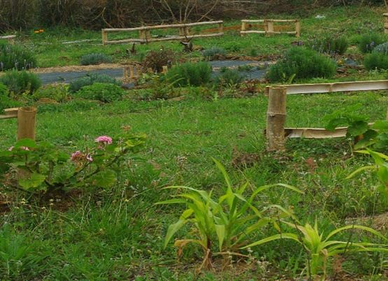 jardin_mandala_un_an_apres