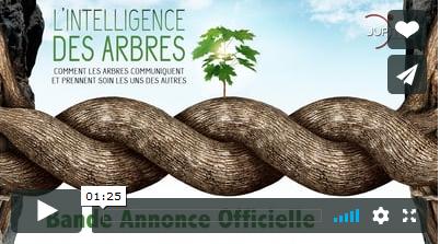 Vidéo : l'intelligence des arbres