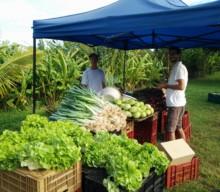AVEC l'AREC, une sage distribution de légumes